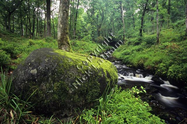 rock stream tree foliage Scotland Trossachs burn river brook water flow wood woodland