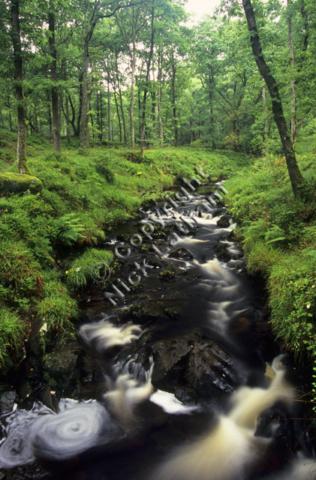 wood woodland river stream burn brook rock water flow blur eddy fern foliage green