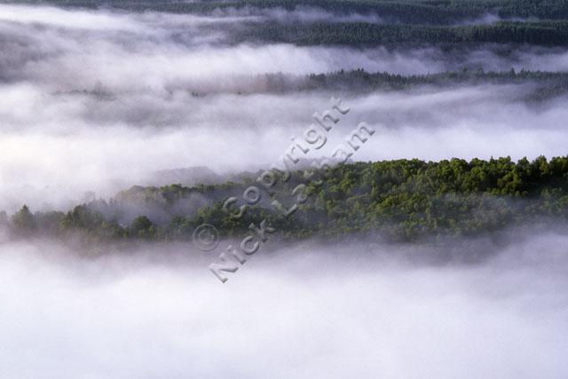 forest cloud inversion mist trees landscape repeat sun wood Scotland Trossachs landscape nature