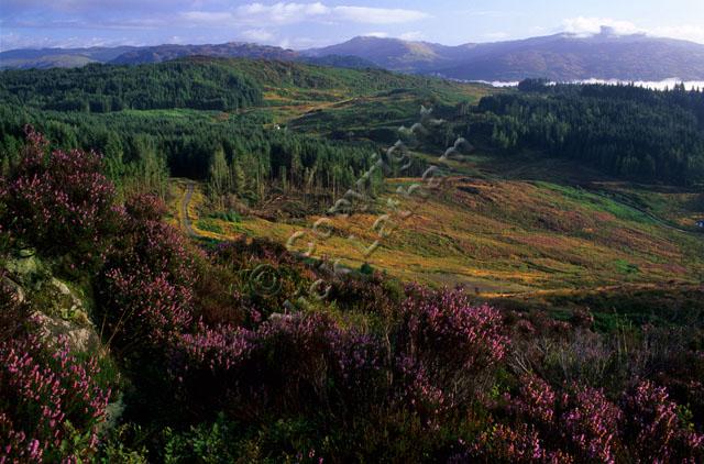 heather pink forest mountain cloud hill slope sunrise sun Duke's Pass Trossachs Scotland sky landscape