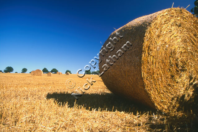straw bale round field farm farming country tradition blue sky stubble summer harvest