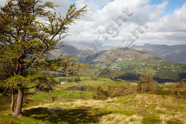 Lake District UK England Britain hill fell mountain range Pikes landscape green tree larch outdoors explore walk hike adventure