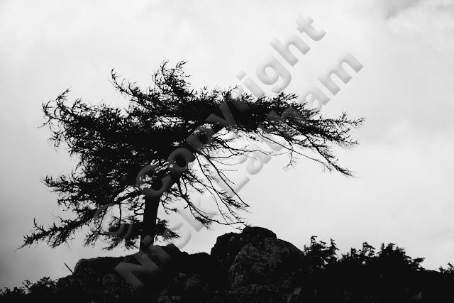 Black Crag Lake District UK England tree bent rock silhouette curve nature monochrome skyline hill fell mountain Wainwright walk hike explore outdoors