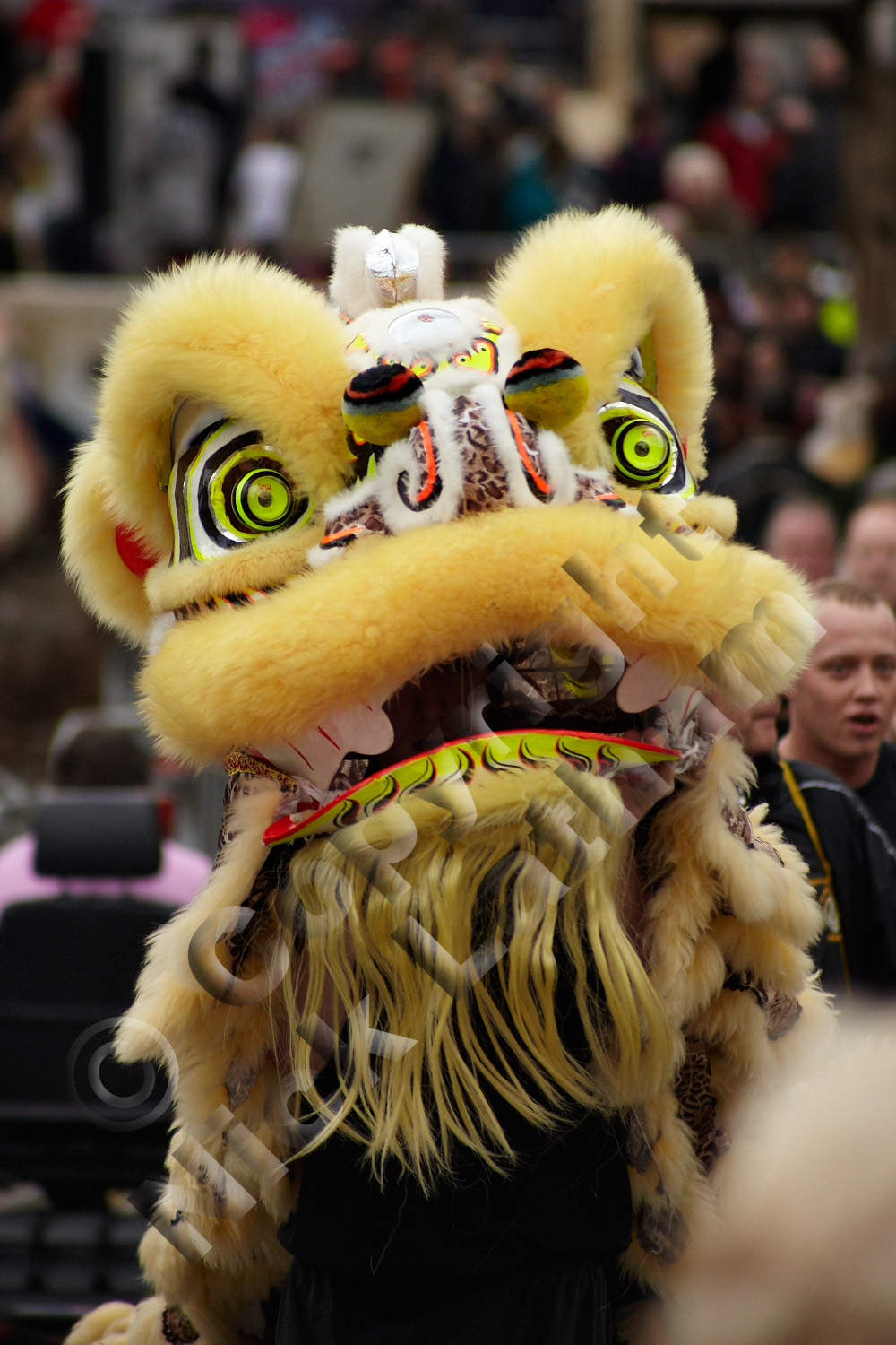 Chinese lion dance - the lion approaches