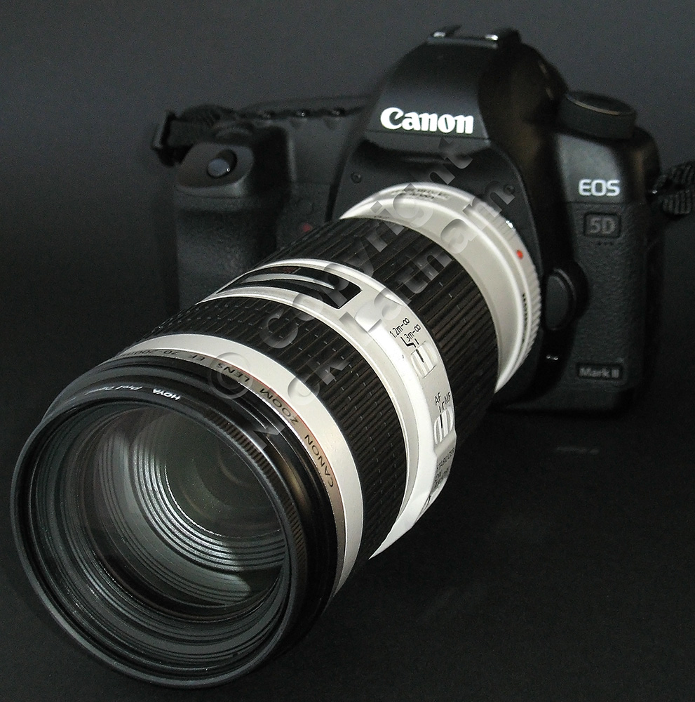 Canon 5DmkII with 70-200mm f4 L IS lens