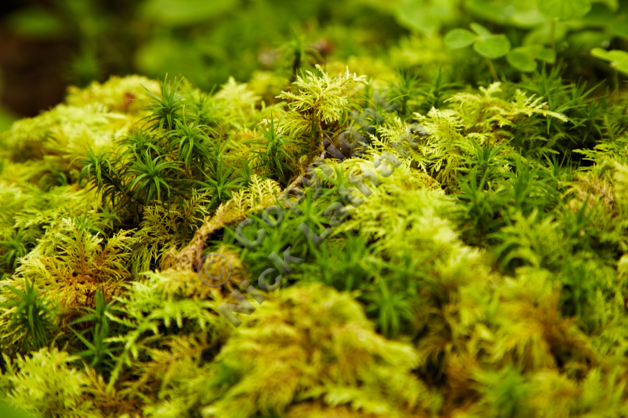 Close-up of moss - details on Doon Hill