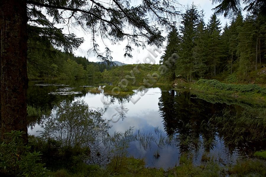Lochan a' Ghleannain in Loch Ard Forest