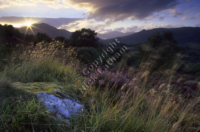 mountain moor hill fell Scotland tree landscape cloud heather pink grass movement sun flare sunset cloud quartz rock