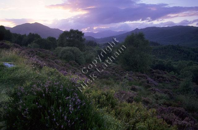 mountain moor hill fell Scotland tree landscape cloud heather pink sunset