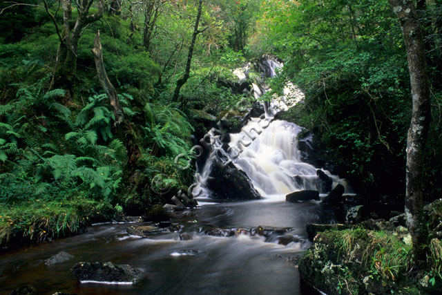 waterfall stream river Scotland Trossachs wood woodland tree rock blur fern green burn
